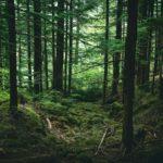 FOREST BATHING E FOREST THERAPY: la riconnessione con il mondo naturale