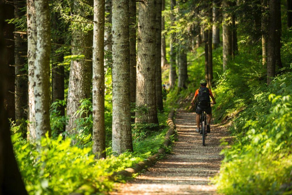 e-bike nel bosco alpe cimbra