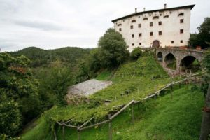 castel katzenzungen con la vite versoaln