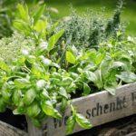 I benefici di 4 piante aromatiche